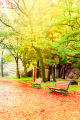 Landscape of garden in the autumn season, empty wooden bench at autumn park in Osaka, Japan. Alone and lonely concepts.