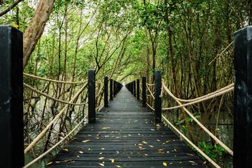 Mangrove forest walkway bridge