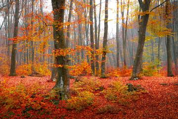 Colorful autumn moment