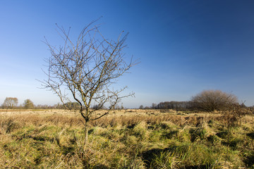 Small tree without leaves on a wild meadow