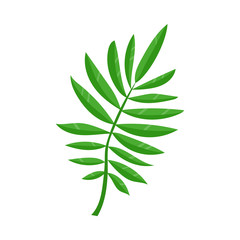 Vector flat summer symbol - tropical green fern leaf icon. Isolated floral illustration on a white background for advertising, poster design.