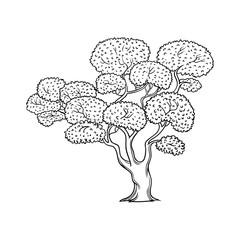 Blossoming cherry, sakura tree, flat cartoon vector illustration isolated on white background. Hand drawn cherry, sakura tree with blossoms, symbol of Japanese culture