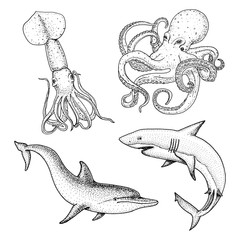 sea creature or fishes dolphin and white shark. octopus and squid, calamari. engraved hand drawn in old sketch, vintage style. nautical or marine. animals in the ocean.