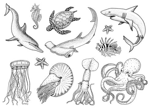 Fishes set or sea creature nautilus pompilius, jellyfish and starfish. octopus and squid, calamari. dolphin and hammerhead shark. green turtle and seahorse. engraved hand drawn in old vintage sketch.