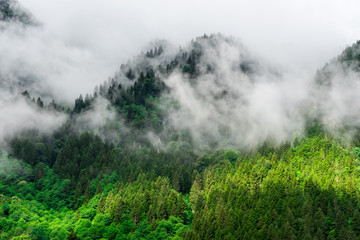Beautiful Foggy Mountains view to Highland and Trees Pine Forest