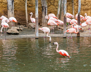 Flamingo - southern water bird with a gentle pink plumage.