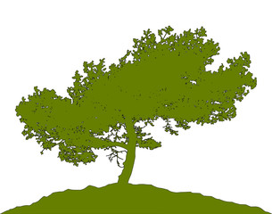 Realistic pine tree silhouette (Vector illustration).ai10