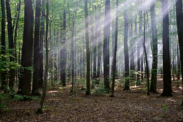 sun beams shine through the trees in autumn