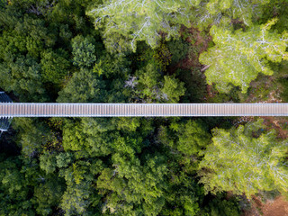 Suspension bridge surrounded by lush green forest - Top down aerial view
