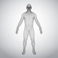 Wire frame human body. Polygonal 3d model on white background