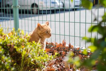 街路樹の陰から何かを見つめる猫
