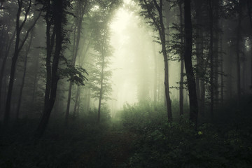 scary green forest with trees in fog