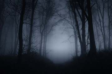 Wall Murals Forest dark scary forest road on foggy night