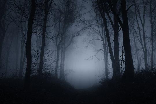 dark scary forest road on foggy night