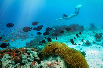 Die bunte Unterwasserwelt der Tropen mit Schnorchelerin und Korallen in den Malediven