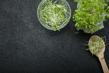 Grow lettuce for a healthy salad. Space for text.