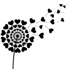 Black fluff dandelion heart shaped on white background