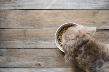 dog besides a bowl of kibble food on wood table