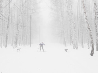 Winter foggy snow-covered birch forest. Abstract minimalistic winter background. A skier climbs a mountain in the forest.