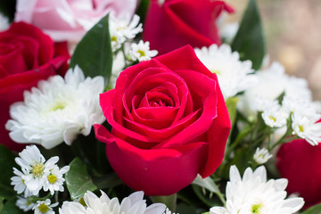 Red rose for Valentine,Close-up rose,Bouquet of red rose,Flowers show love,Bouquet of red flower and white flower