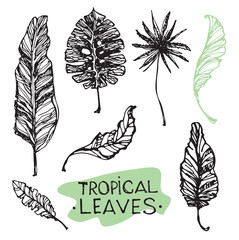 Hand drawn doodle tropical leaves.