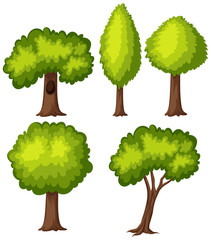 Different types of green tree