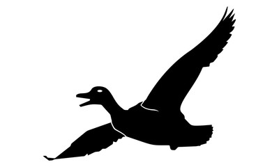 vector image of flying duck