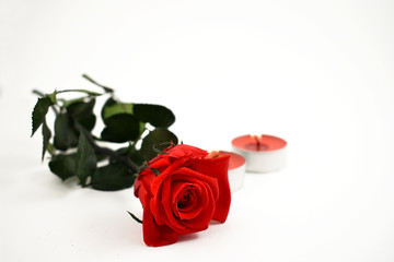 Red rose with candle stock images. Red candle with red roses. Romantic roses on a white background