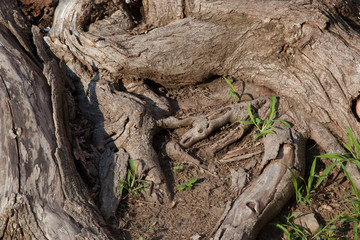 Tree stump for textured natural background