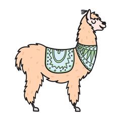 Hand drawn Peru animal, alpaca, vicuna.