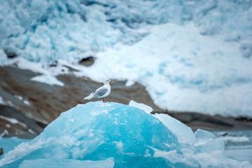 single sea gull sitting on top of an iceberg
