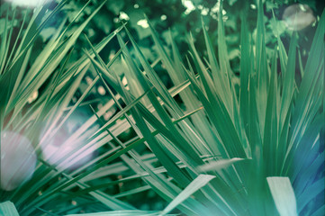 Green leaves of a palm tree abstract pattern background