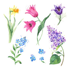 Spring floral set. Collection with watercolor flowers, Anemone, Narcissus, Daffodil, Lilac flowers, Tulip, Forget-Me-Not Flower