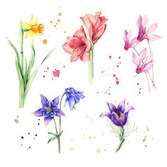 Watercolor multicolored flowers, floral botanical set