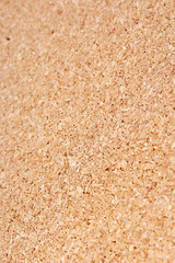 Corkwood texture pattern background. Cork wood. Wooden texture closeup.