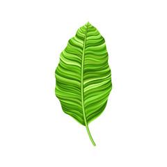 Watercolor Leaf Vector