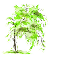 Watercolor summer, spring landscape. Green tree on a bright grass. Green tree, willow, birch, aspen, on white isolated background.