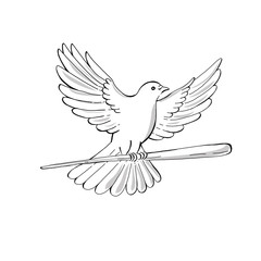 Pigeon or Dove Flying With Cane Drawing
