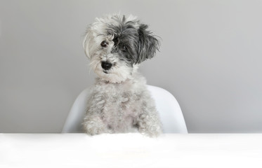 Cute Surprised Dog on a Gray Background. Concept of Canine Emotions
