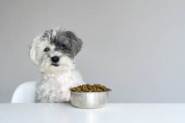 Hungry  Dog is Feeding at Table Wall mural