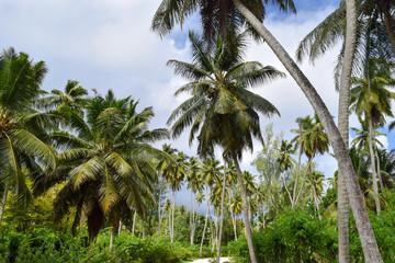 Palm Field