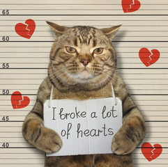 Bad cat broke hearts