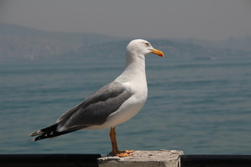 seagull standing on the wall