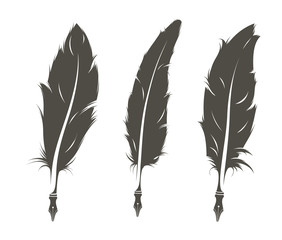 set of three isolated feathers for writing