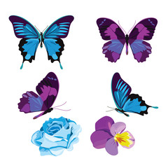 Set collection of blue and violet butterflies and flowers isolated on white background. Vector illustration