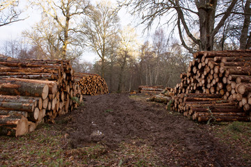Stacks of cut logs of trees following forestry operations
