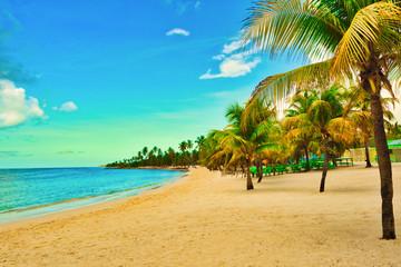 paradise tropical beach palm caribbean dominican