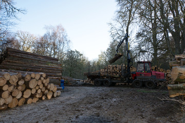 A machine lifting tree logs from a trailer and placing them onto one of many stacks of logs