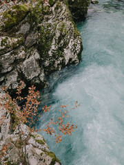 Leaves and wild river. Pure nature.
