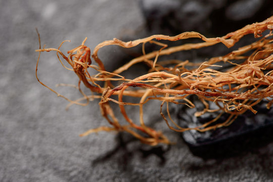 Chinese herbal medicines -- ginseng rootlets on stone background
